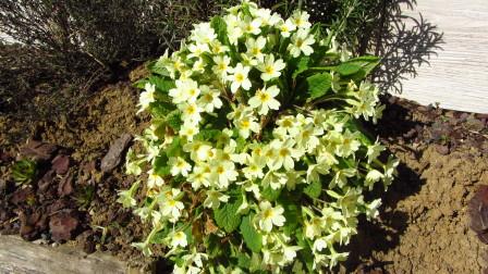 Jardin---avril-2013 0690
