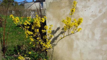 Jardin---avril-2013 0691